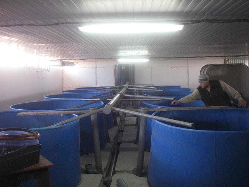 Выращивание рыбы как бизнес рыбоводный модуль осетр 12